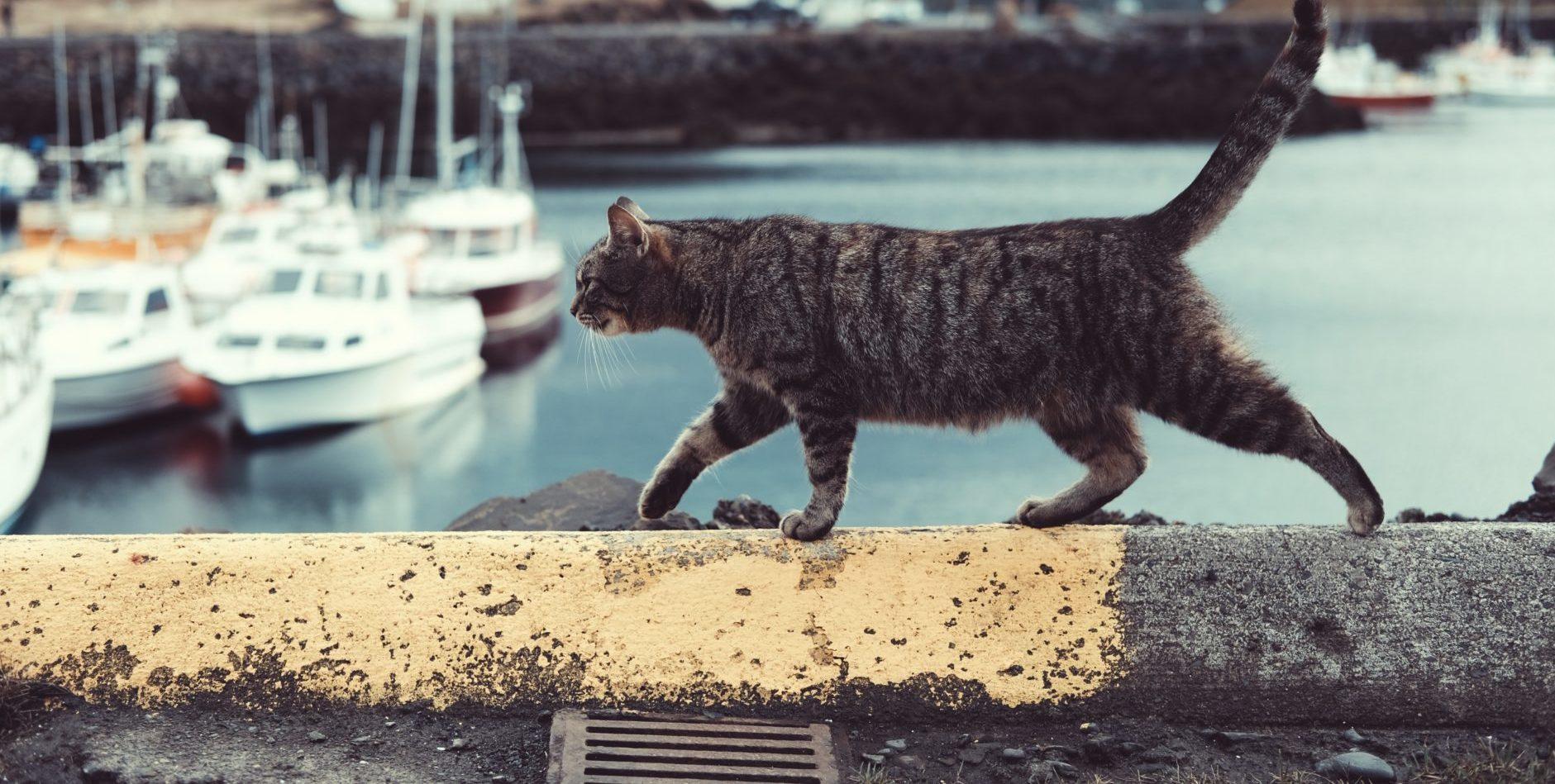 macskám, hogyan lehet pénzt keresni)
